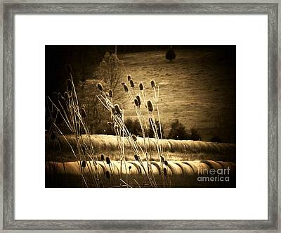 Cat Tails And Hay Rolls Framed Print by Joyce Kimble Smith