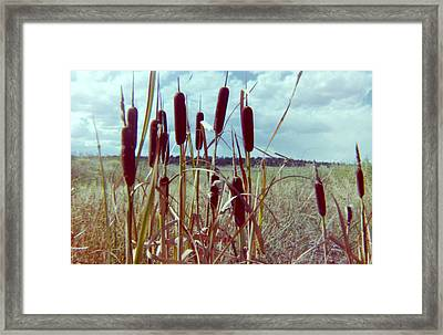 Framed Print featuring the photograph Cat Tails by Bonfire Photography