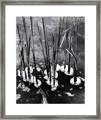 Cat-tails In Ice Framed Print by Todd Sherlock