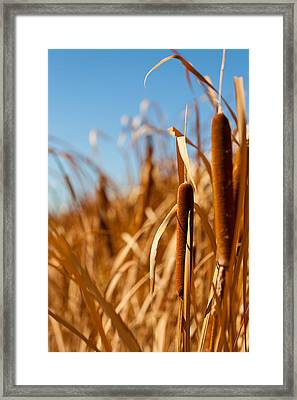 Cat Tails Framed Print by Peter Tellone