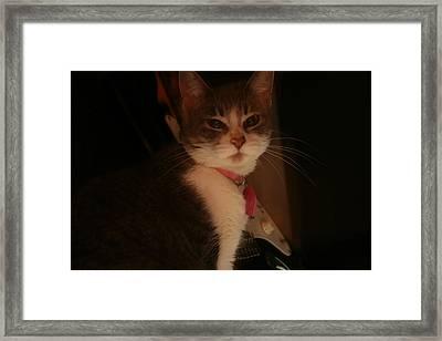 Cat The Majestic Framed Print by Eduardo Bouzas