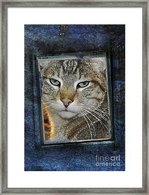 Cat Through A Tiny Window Framed Print by Mary Machare