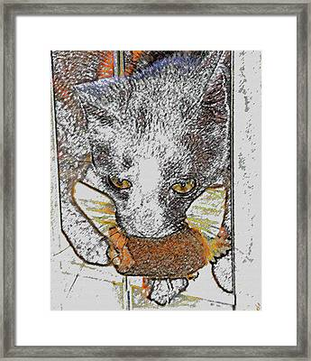 Cat Toy Framed Print by David Lee Thompson