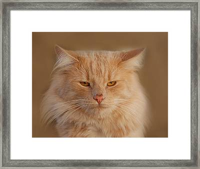 cat Framed Print by Waldek Dabrowski