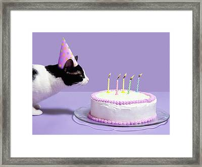 Cat Wearing Birthday Hat Blowing Out Candles On Birthday Cake Framed Print by Steven Puetzer