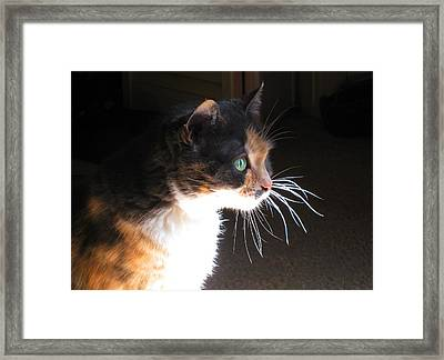 Cat Whiskers Framed Print by Sue Halstenberg