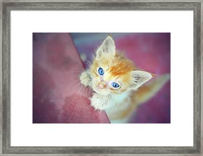Cat With Blue Eye Framed Print