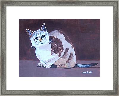 Cat With Brown Background Framed Print