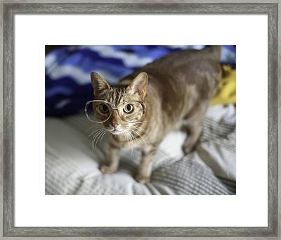 Cat With Glasses Framed Print by Www.sharp-photo.com