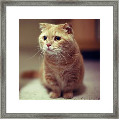 Cat With Inquisitive Look Framed Print