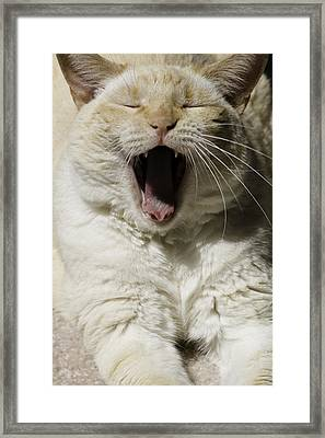 Cat Yawn Framed Print by Wendy White