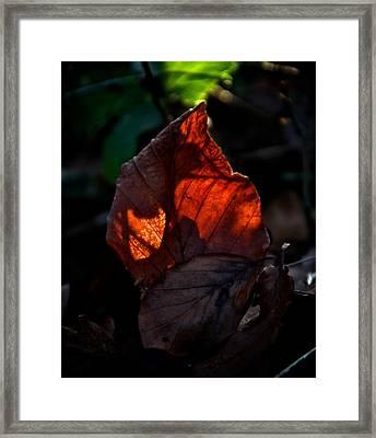 Catch A Fire Framed Print by Odd Jeppesen
