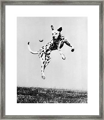 Catch It Spotty Framed Print by Three Lions