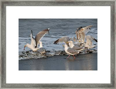 Catch Me If You Can  Framed Print by Debra  Miller