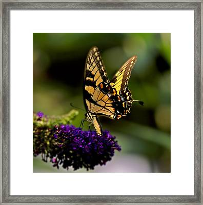 Catch Me If You Can Framed Print