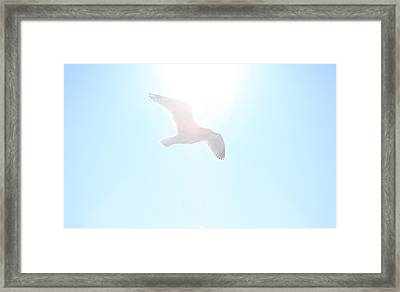 Catch The Rays Framed Print