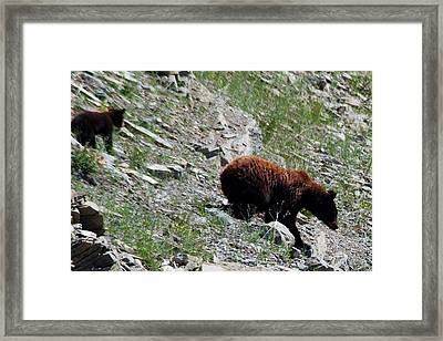 Catch Up Framed Print by Abe Lamberts