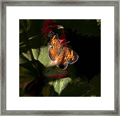 Framed Print featuring the photograph Catching Rays by Michael Friedman