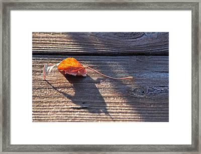 Catching The Light Framed Print by Lauri Novak