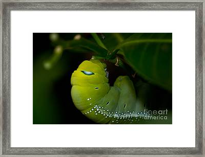 Caterpillar  Framed Print by Venura Herath