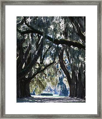 Cathedral Ford Plantation Framed Print by Mary Sparrow