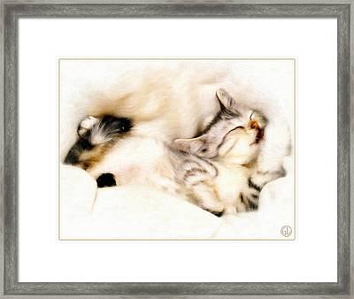 Catnap Framed Print by Gun Legler