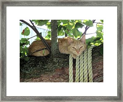Framed Print featuring the photograph Catnap Time by Thomas Woolworth