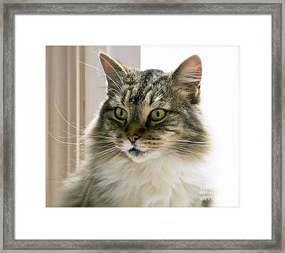 Cats Are Magical Framed Print by Gwyn Newcombe
