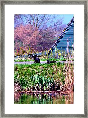 Cats At The Canal Framed Print