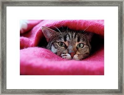 Cat's Den Framed Print by Christian JACQUET
