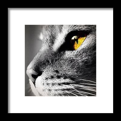 Eye Framed Prints
