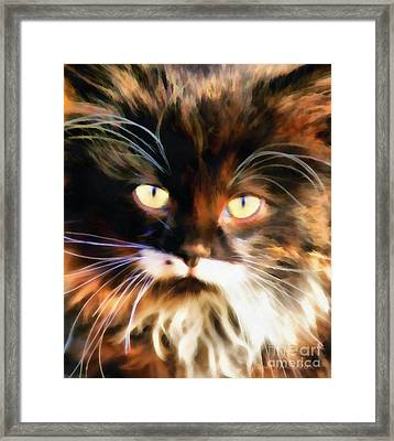 Cats Eyes Framed Print by Clare VanderVeen
