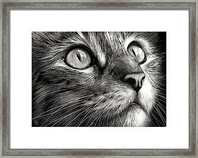 Cat's Face Framed Print by Elena Kolotusha