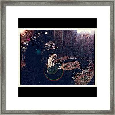 Cats From Another Planet Framed Print
