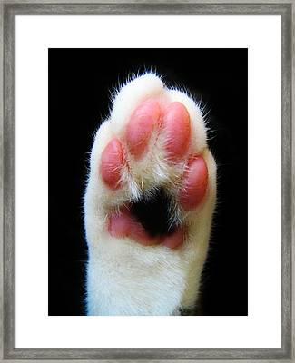 Cat's Honor Framed Print by Art Dingo