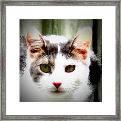 Cats Meow Framed Print by Bill Cannon