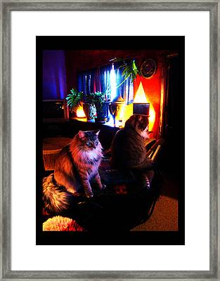 Framed Print featuring the photograph Cats On A Drum by Susanne Still