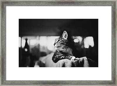 Cats Portrait Framed Print by Sumit Mehndiratta