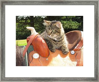 Cats Ride Free Framed Print
