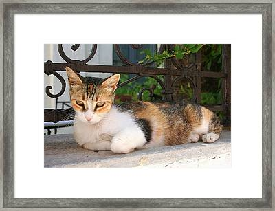 Cats Rule Even In Santorini Framed Print by Laurel Talabere