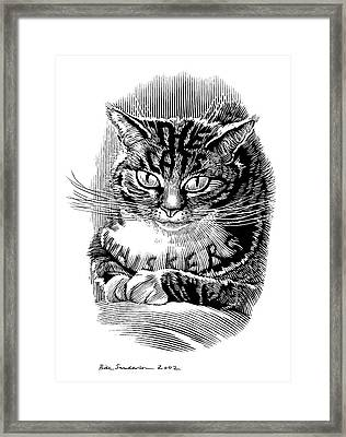 Cat's Whiskers, Conceptual Artwork Framed Print by Bill Sanderson