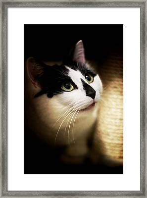 Catsablanca Framed Print by JM Photography