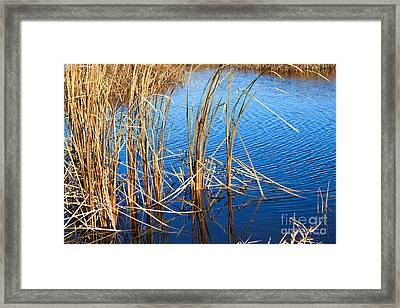 Cattail Reeds Framed Print by Ms Judi