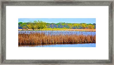 Framed Print featuring the photograph Cattails by Joe Urbz