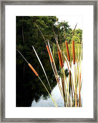 Cattails On The River Bank Framed Print