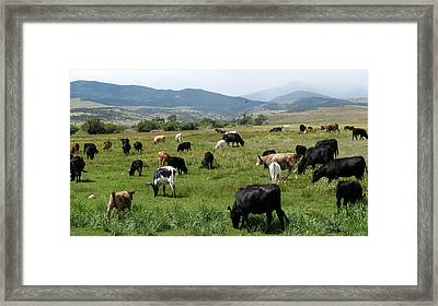 Cattle Country Framed Print by Daniel Dodd