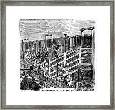 Cattle Drive, 1874 Framed Print by Granger