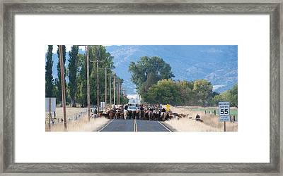 Cattle Drive 2 Framed Print by Gary Rose