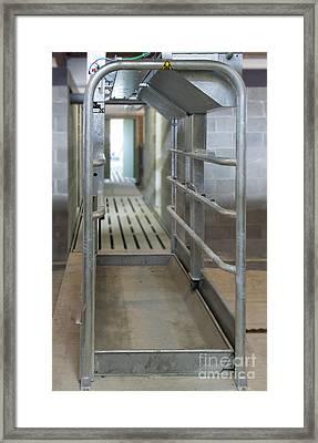 Cattle Foot Bath Walkway Framed Print