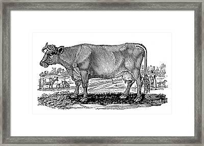 Cattle Framed Print by Granger
